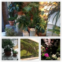 Have you noticed all the greenery showing up in stores, restaurants, even art fairs?