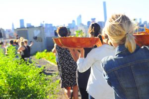 Rooftop Farm Dinners: Super cool and delicious food!