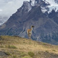 Travel Notes: Still Swooning Over Patagonia